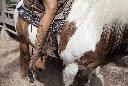 cowboy 15