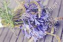 englishwildflowers